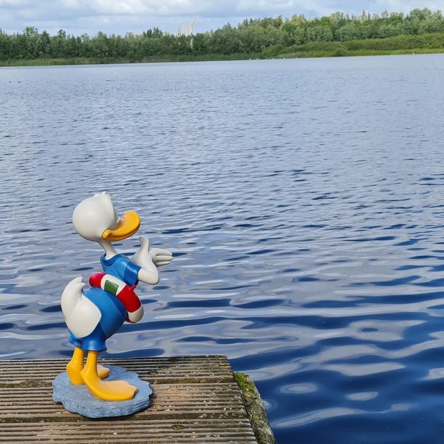 Donald Duck diving